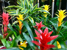 Tropical Bromeliad Plant Sale! (Today Only)