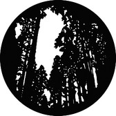 GAM 309 Tall Trees
