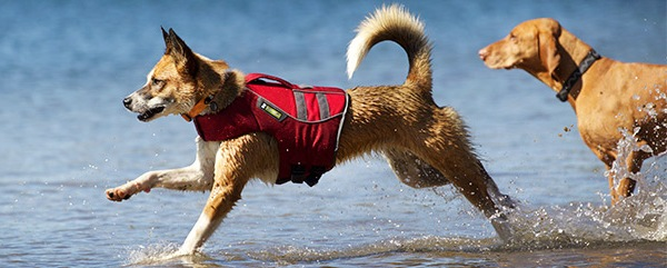 ss11-dog-lifejackets-banner-02.jpg