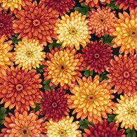 Autumn Album - Mums