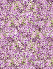 Hydrangea Dreams - Packed Hydrangeas Purple