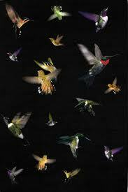 Alexander McQueen Cashmere Silk Aubusson Rug Hummingbird rug