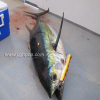 Yellowfin  -  PV Mexico, April 2012