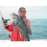 Nice Sea Bass caught with: Black Hole Taifun-V Jig + Black Hole Shotgun Limited Rod + Jigging Master Arrester Reel @ Cape Cod, June 2012