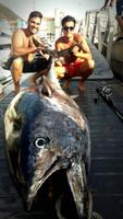 400lb Bluefin Tuna