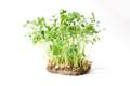 Organic Pea - Speckled 1 oz (Small)