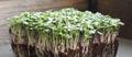 Organic Salad Mix Diverse 1 oz (Small)