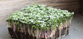 Organic Salad Mix Spicy 1 oz (Small)