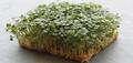 Organic Arugula 3 oz (Large)