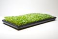 Organic Kale 3 oz (Large)
