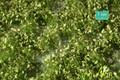MININATUR 725-31 - 1/45+ Weed Tufts - Spring