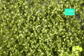 MININATUR 920-31 - 1/45+ Beech Foliage - Spring