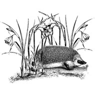 Hedgehog with Flowers Silicone Mounted Rubber Stamp LaBlanche
