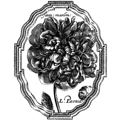 Framed Peony Silicone Mounted Rubber Stamp LaBlanche