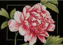 Pink Rose on Black Aida Counted Cross Stitch Kit LanArte