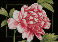 Pink Rose on Black Aida Counted Cross Stitch Kit LanArte