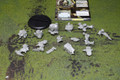 Protectorate of Menoth Repenter Lot 7615 Blue Table Painting Store