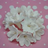 Agapanthus Bunch - White