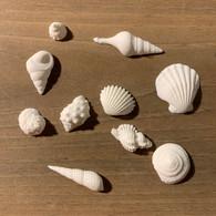 Petite Edible Shells (20 per box)