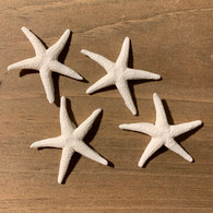 "1.5"" Starfish Pack (12 per box)"