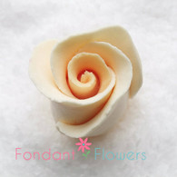 Rosebud -  Open -  Cream (10 per box)