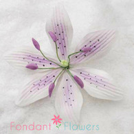 "3.5"" Stargazer Lily - Large - Lavender (Sold Individually)"