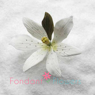 "2.5"" Exotic Lily - Small - White (Sold Individually)"