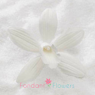 "3"" Phalaenopsis Orchid - Large - White (Sold Individually)"