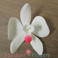 "3.5"" Phalaenopsis Butterfly Orchid - Large - White (Sold Individually)"