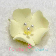 "1.25"" Fruit Blossom - Yellow (10 per box)"