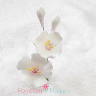 "3"" Cherry Blossom Filler - White w/ Pink (Sold Individually)"