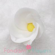 """1-1/8"""" Frangipani Plumeria - Small - White (10 per box)"""