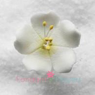 """1.25"""" Jasmine - White (10 per box)"""