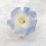 "1-3/8"" Morning Glory - White w/ Blue & Lavender (10 per box)"