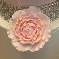 "3"" Ranunculus - Large - Pink (Sold Individually)"