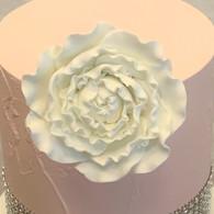 "3"" Ranunculus - Large - White (Sold Individually)"
