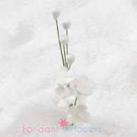 "2.5"" Forget-Me-Not Blossom Filler - White"
