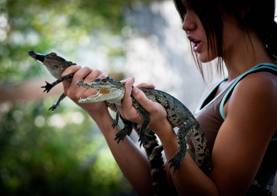 Girl holding baby alligators