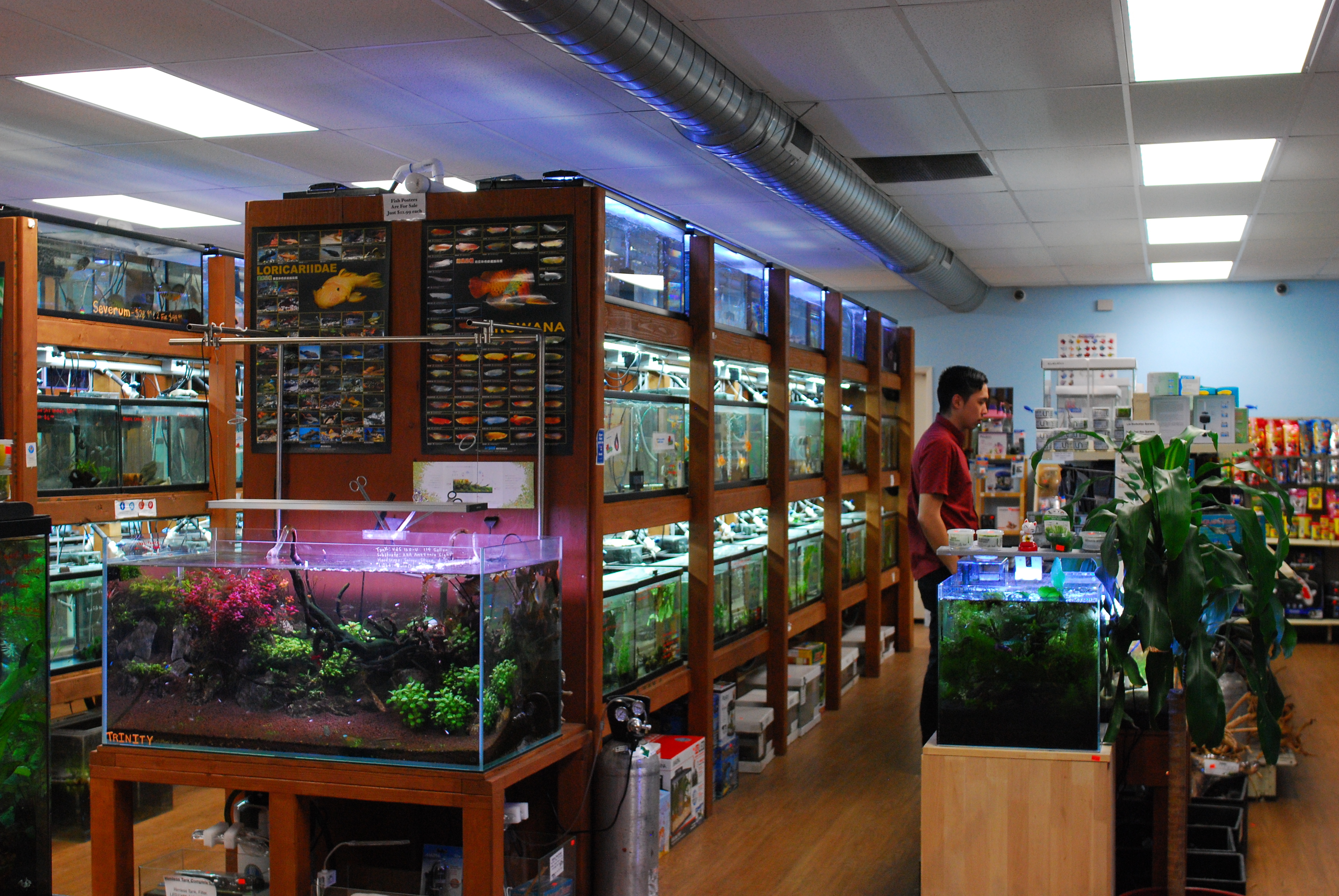 Pet Zone Convoy/Kearny Mesa is the go-to LFS for aquatic plants and freshwater tropical fish!