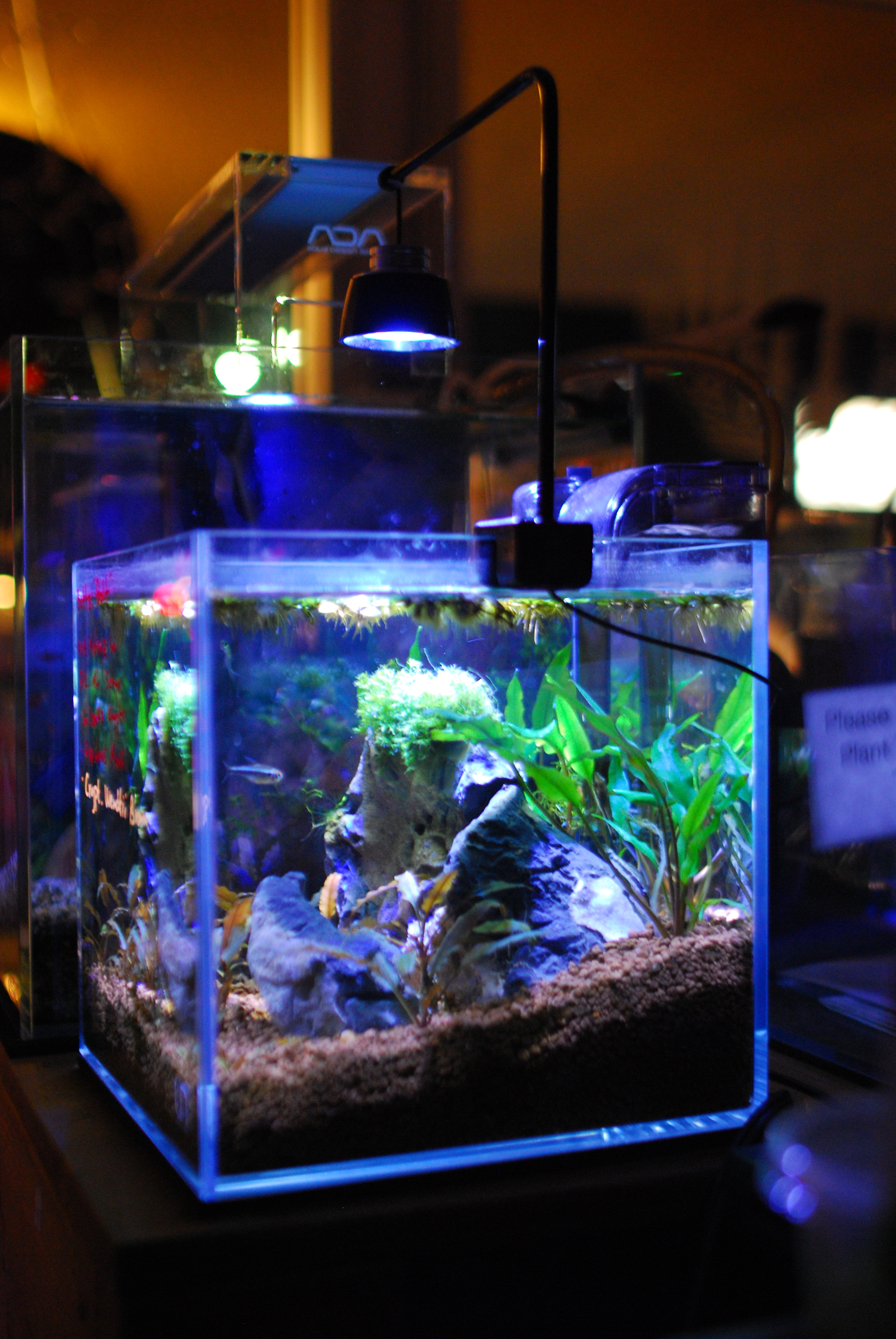 UNS 20C Rimless Tank - Low-Tech Plants with ADA Aquasoil & Crypto plants