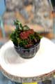Japanese Moss Pot Workshop