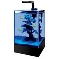Aqueon Cue™ 2.5 Gallon LED Glass Desktop Aquarium
