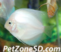 White Diamond Discus, Large