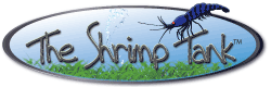 The Shrimp Tank