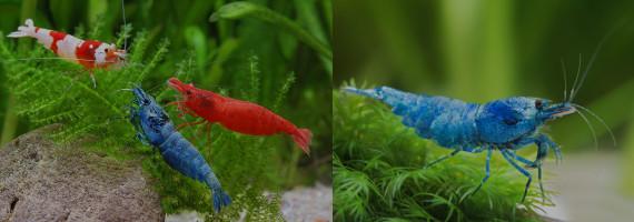 570x200-shrimp.jpg