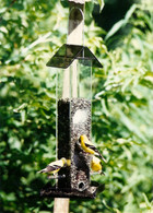 Sunflower All Purpose Feeder S-11