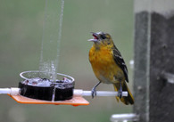 Oriole Jelly Feeder OR-1J
