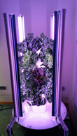 Tower Garden Aeroponics Growing System
