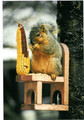 Squirrel Chair Squirrel Feeder