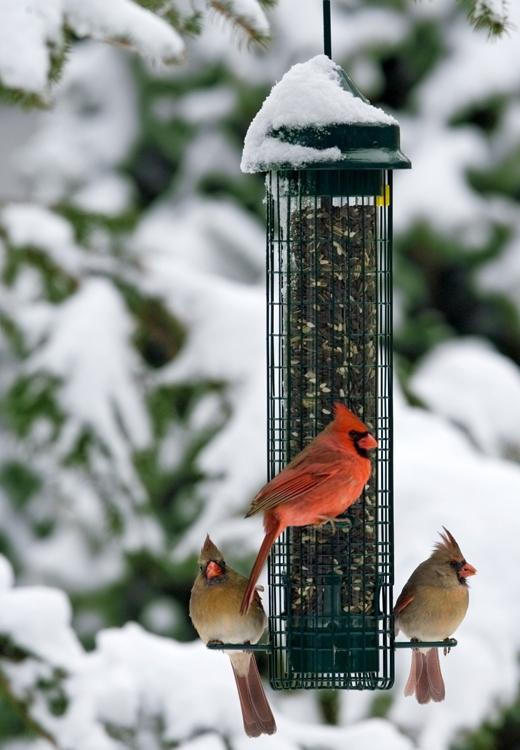 Late Winter Birdfeeding Jcs Wildlife